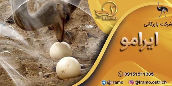 تخم شتر مرغ و کاربرد آن