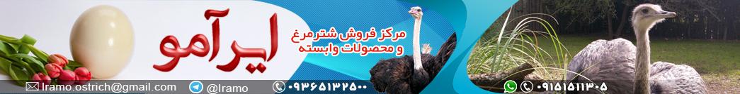 فروش شترمرغ